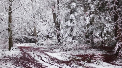 Panning right to left in forest covered in snow with red leaves