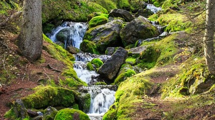 Small creek and waterfall with clear spring water in wild nature