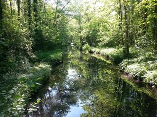 La rivière dans les bois