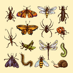 Insects sketch set