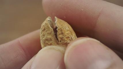 Opening Peanut Shell Macro