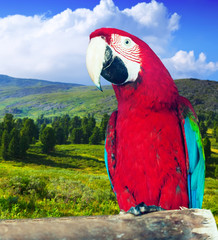Macaw at wildness