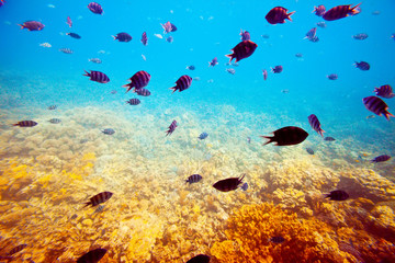 fishes on coral reef area