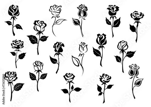 Black and white roses flowers