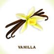 Vanilla pod isolated on white