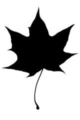 blatt_schwarzweiss_leaf_blackandwhite_20