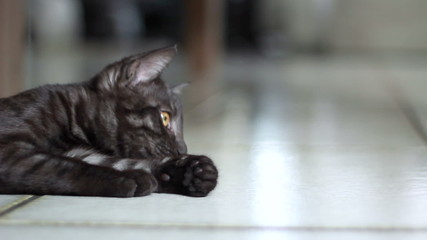 Grey kitten playing with a string. Find similar in our portfolio
