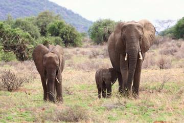 Elefantenfamilie