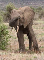 lustiger Elefant