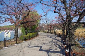 秋の上野公園の道