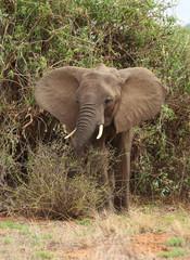 Elefant am Baum