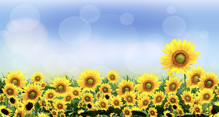 beautiful sunflower natural images