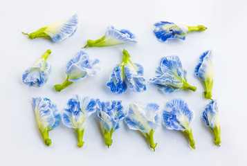 Group ofwhite mix blue butterfly pea flower on white background
