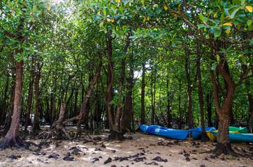 石垣島 宮良川のヒルギ林