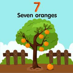 Illustrator of number seven oranges