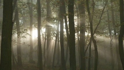 Sunrise in the forest with sunrays shining through trees