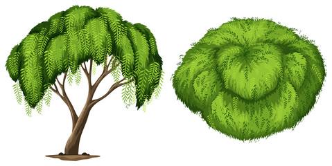 A California Pepper Tree