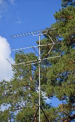 Уличная телевизионная антенна на фоне сосен