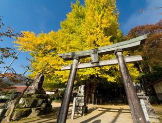 筒賀神社の大銀杏