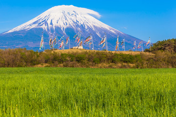 Colorful carp banners and Mount Fuji