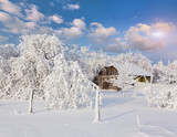 heavy snowfall covered the trees and houses in village.