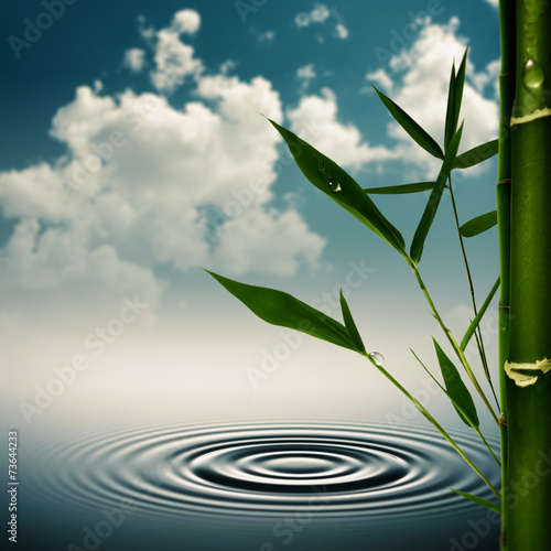 In de dag Bamboo Environmental asian backgrounds with bamboo grass