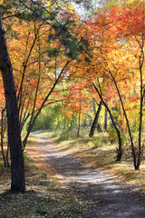 Autumn landscape - path in a mixed forest