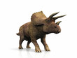 Triceratops  on a white background - 73646644