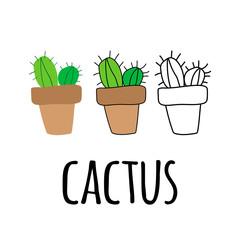 flay cactus in a pot, Line cactus in a pot