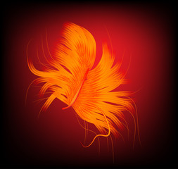 flame color feather on dark background