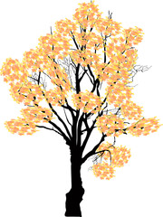 light yellow fall tree isolated on white