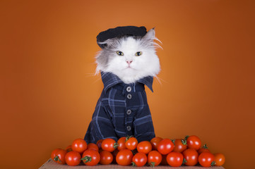 cat in a suit Georgian sells tomatoes
