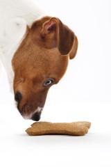 Psie smakołyki