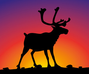 vector reindeer on the background of sunset sky