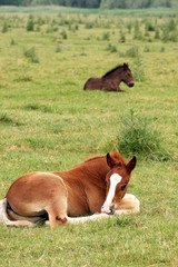 two foals lying on pasture