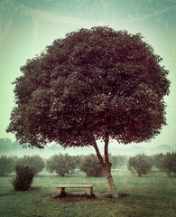 Lonely tree and empty bench