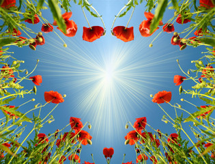 Valentine card as heart with poppies in sun`s glow (February 14,