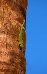 Gecko on tree