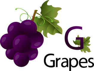 Illustrator g font with grapes
