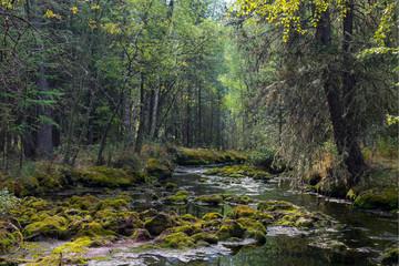Дикий лес на берегу ручья