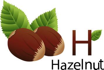illustrator h font with hazelnut