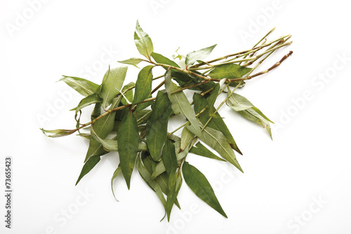 canvas print picture Vietnamesischer Koriander ( Polygonum odoratum ),erhöhte Ansicht