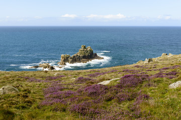 heather and cliffs at Land End, Cornwall