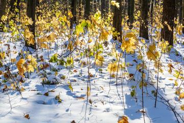 Autumn forest under first snow. Winter landscape.