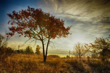 Autumn tree on meadow with dramatic sky