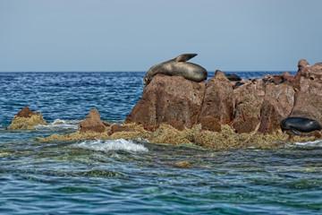 los islotes seal island in mexico baja california