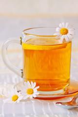 Hot tea daisy isolated.