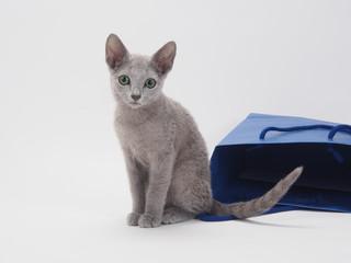 青い手さげ袋とロシアンブルーの子猫
