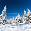 Schneezauber im Winterwald