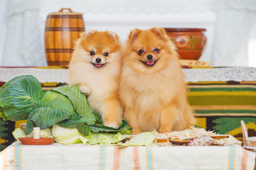 Smiling spitz dogs and autumn harvest decoration